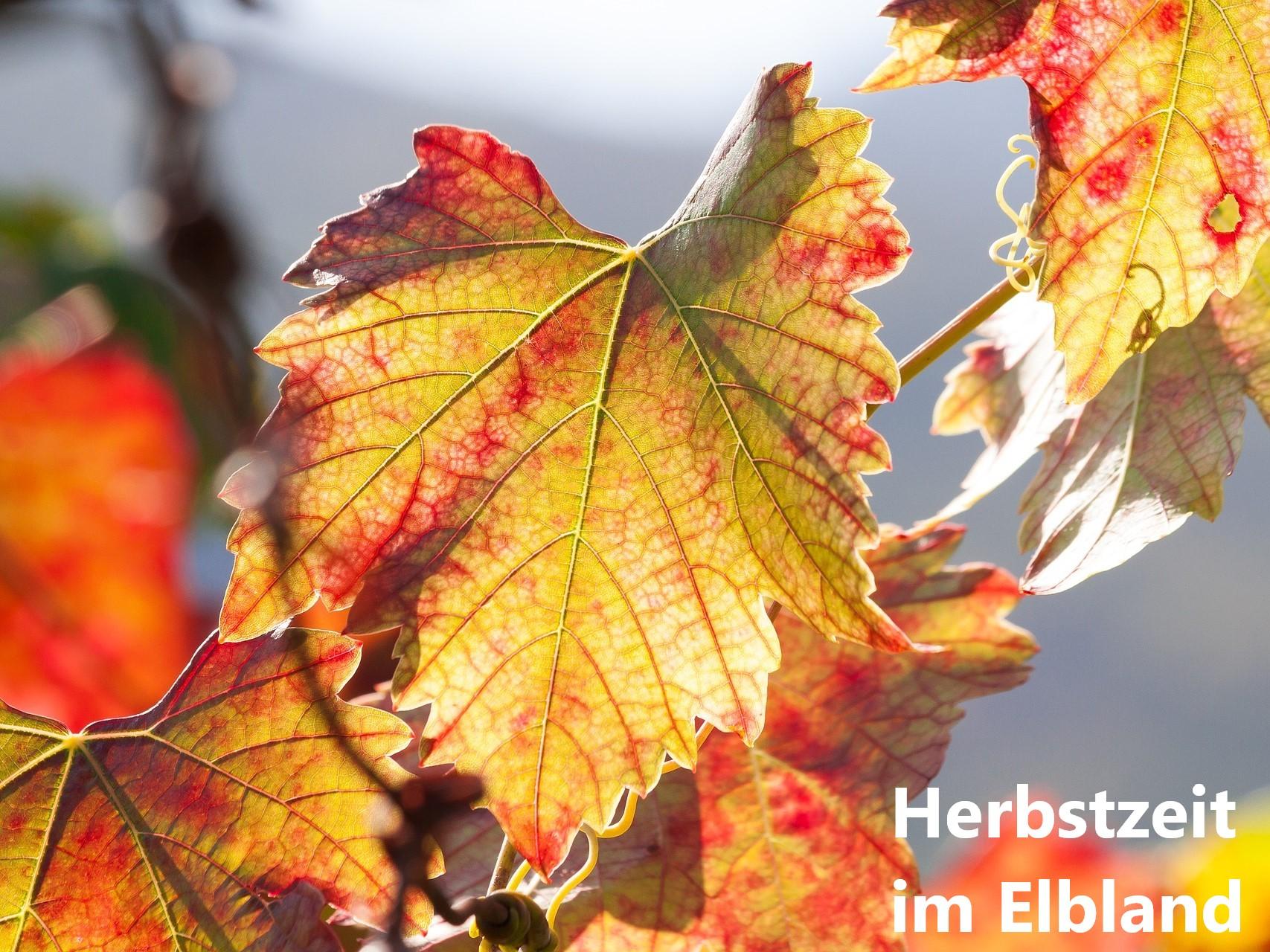 Weinlaub im Herbstjpg