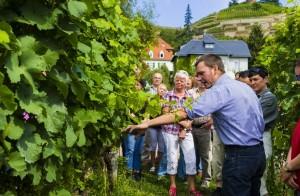 (Copyright © Sylvio Dittrich +49 1772156417) Tag des offenen Weingutes in Sachsen, Führung durch das Weingut Hoflössnitz.