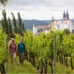 Weinwandern-Meissen_Foto_TMGS
