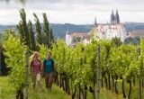 Upgrade Ausflugstipp: Weinwanderweg