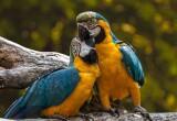 Ausflugstipp Wildgehege und Mini-Zoos
