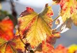 Herbstausflüge in der Region