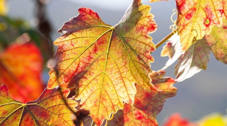 Herbstzeit im Elbland